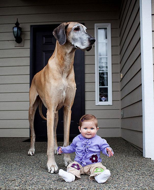 31. Best friends size dog