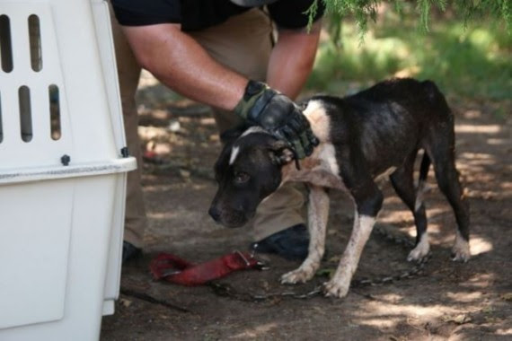 She was having trouble moving, so rescuers were patient with her to get her to stand. It was clear she didn't have much fight left in her.