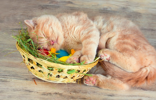 Cat Easter Basket: Ideas For Filling Your Kitty's Basket - Cats and Meows