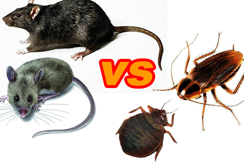 Pests of the New Year Part Two: Roaches AND Rodents?!?! - Buzzkill Pest Control