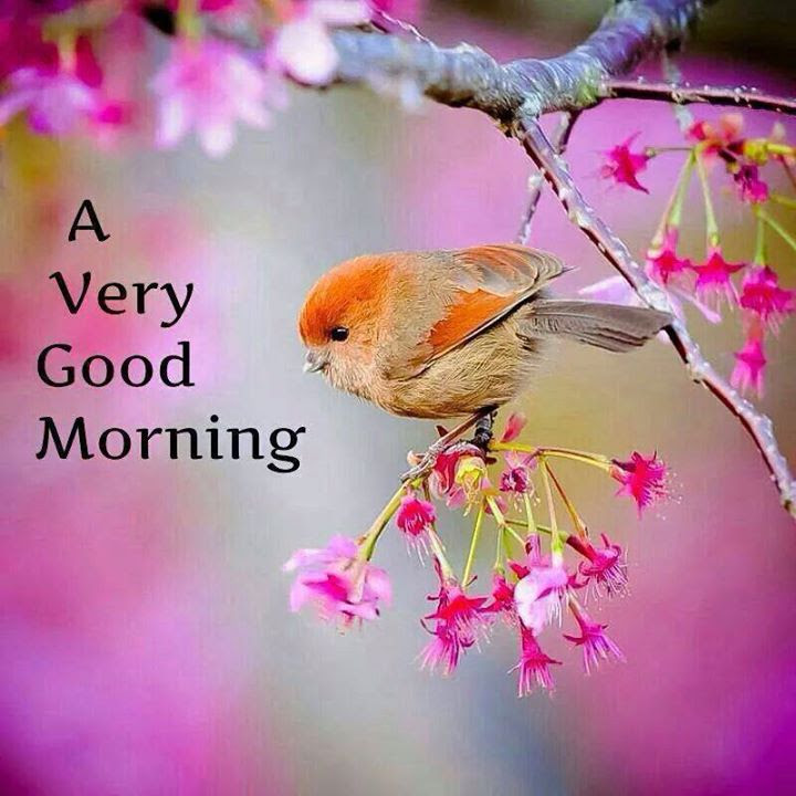A Very Good Morning With A Beautiful Bird Images Good Morning