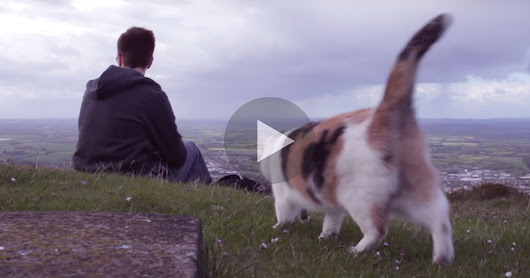 He Took His Cat On A Mountain. But Wait Till You See The Cat's Eyes…