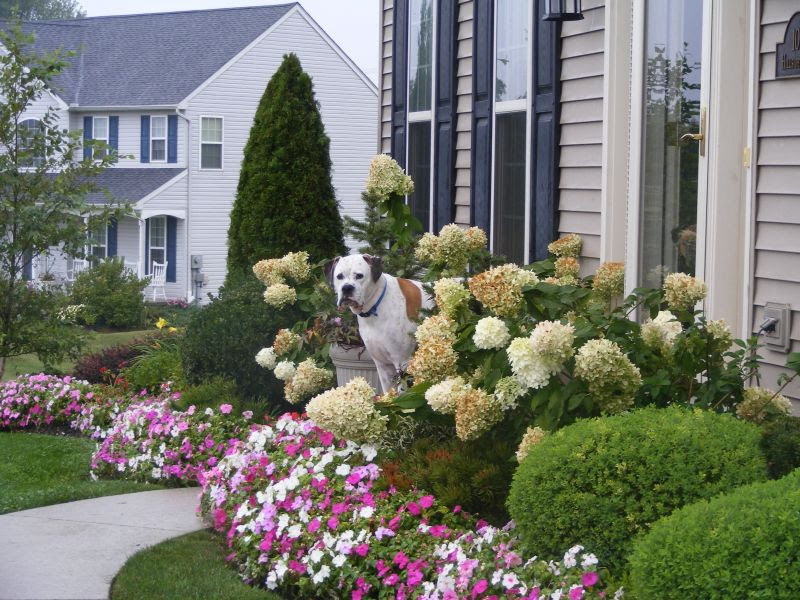 Landscaping Ideas 201207