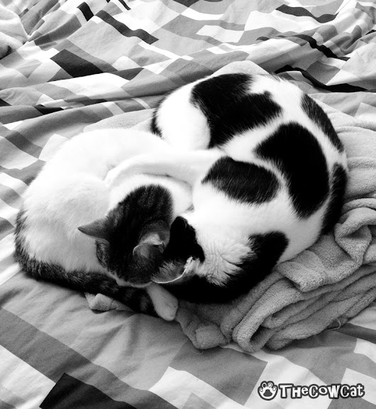 Sometimes you just need a hug! - The Cow Cat