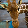 Why did Copenhagen zoo decide to kill Marius the giraffe? Read this article from the TIME. It will be the topic of next FREE GROUP LESSON for UPPER INTERMEDIATE level. Subscribe to the class right now!