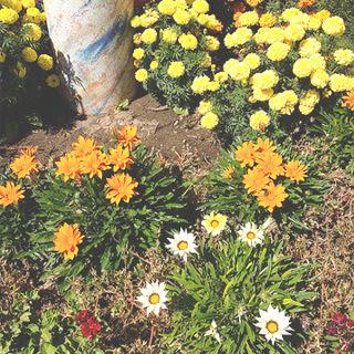Biking flowers 9.8.12