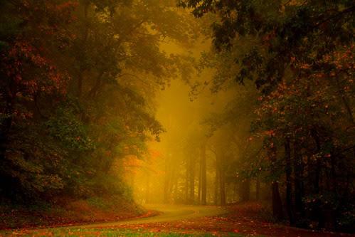 Mist of Autumn