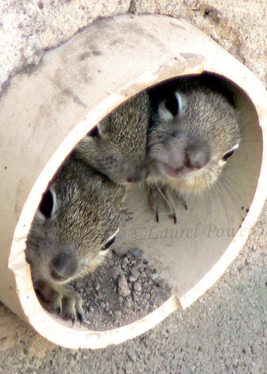 Twitter / SquirrelBeebz: Hi, would you like your gutters ...