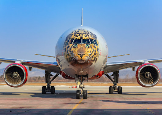 The 7 coolest airplane liveries in the world and the stories behind them