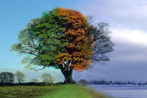 4 jaargetijden als een mensenleven. Geluk en diep verdriet wisselen zich af als zomer en winter.. Als berg en dal. En ondertussen groeit de boom to een majestueus wezen.