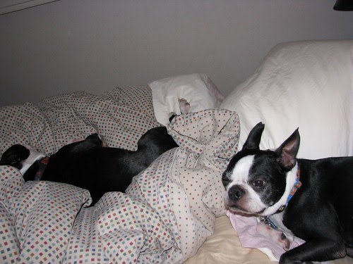 why is he in MY bed?`