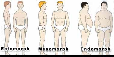 Body Categories