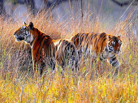 Jim Corbett National Park: More Than A Tiger Reserve