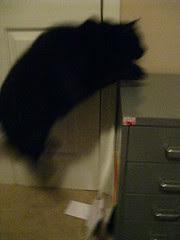 Huggy Bear jumping