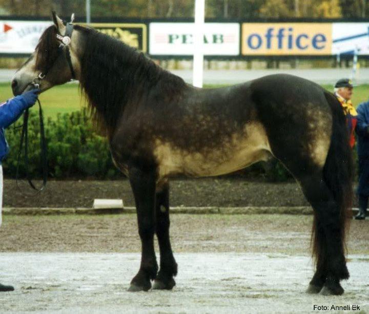 Redhead with darkening animal horse