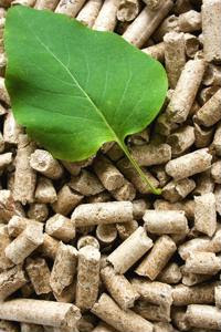 Procuring energy derived from biomass: Efficient or costly?