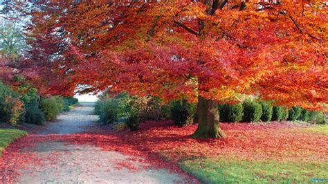 autumn season  pakistan  falling season autumn