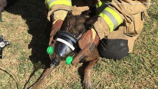 OC firefighters, police save dog, cat with special CPR masks