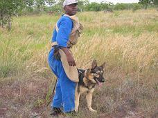 doghandler