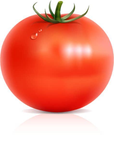 Vectorian art: Big red tomatto vectorfree download, free