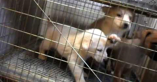 Prohibit sale of animals in the Sonora Market SIGN AND SHARE THIS PETITION NOW!