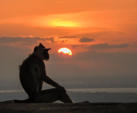 Mihinthale: A Langur's evening