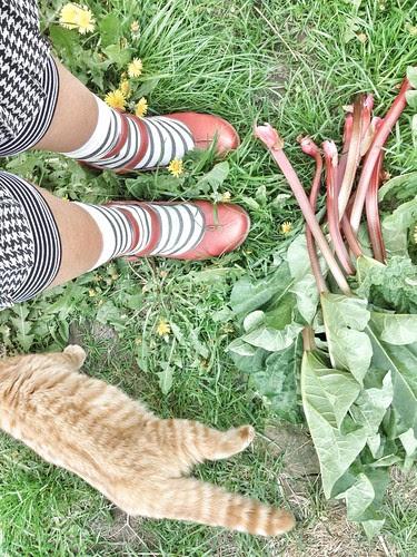 first rhubarb