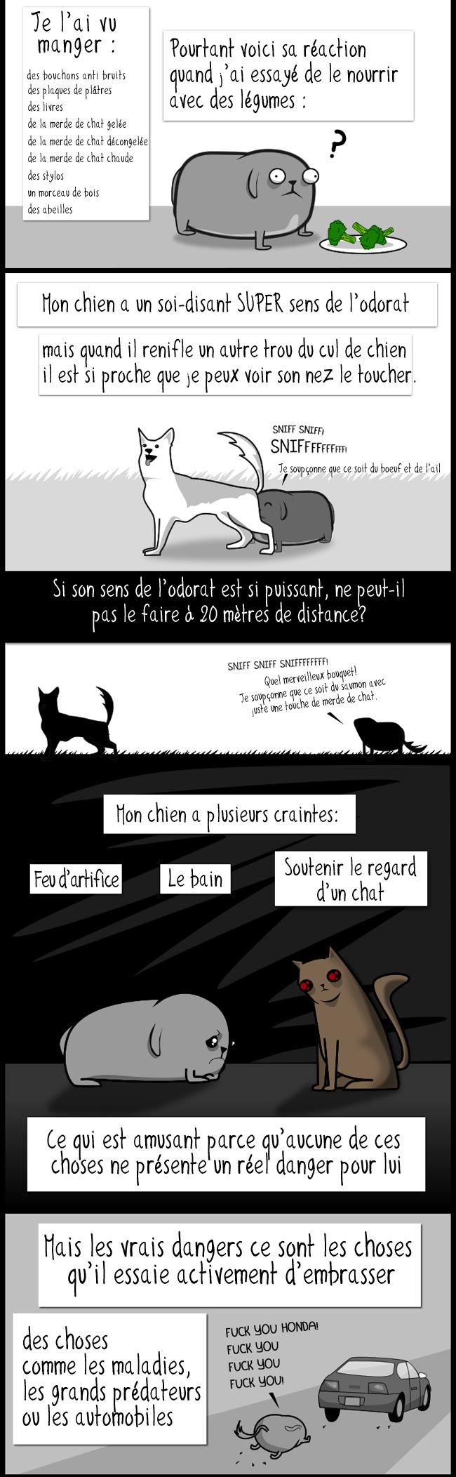 Mon chien: le paradox