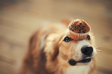 Dog Puns: 20 Dog Puns That Will Give You Paws   Reader's