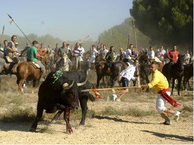 El Toro de la Vega en Tordesillas. PARTIDO ANIMALISTA - PACMA