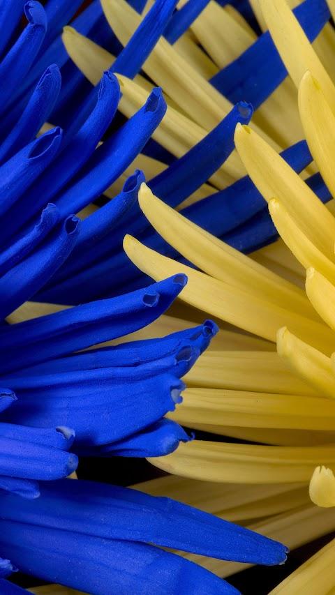 خلفية وردة ازرق و اصفر مكبرة بدقة عالية hd