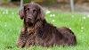 Las intoxicaciones por productos químicos más frecuentes en los perros