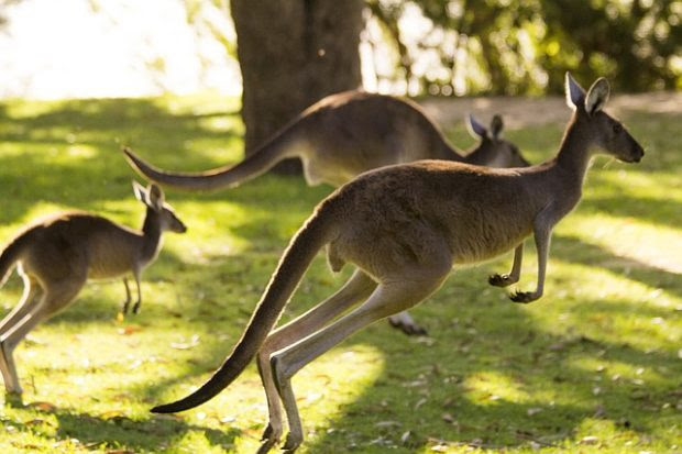 Moving to Australia? Here are A Few Things to Know