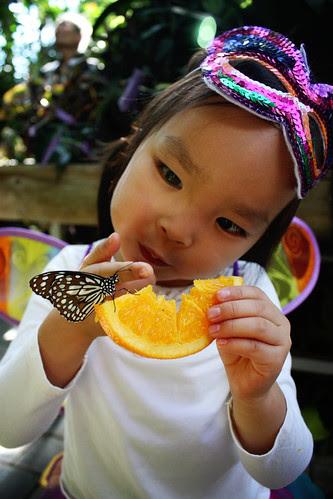 Carleton University Butterflies