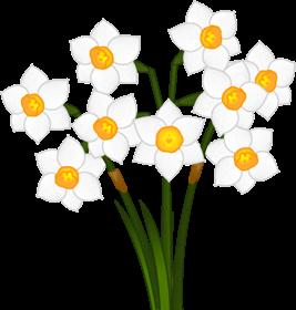 水仙の花イラスト白色5月季節素材のプチッチ