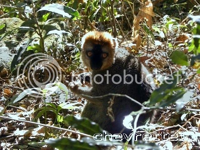 http://i1252.photobucket.com/albums/hh578/chevrette13/Madagascar/DSCN0600640x480_zps6d52a0b8.jpg