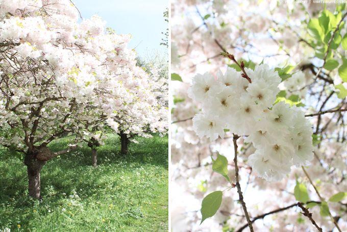 http://i402.photobucket.com/albums/pp103/Sushiina/cityglam/blossom6_zps2aa085b8.jpg