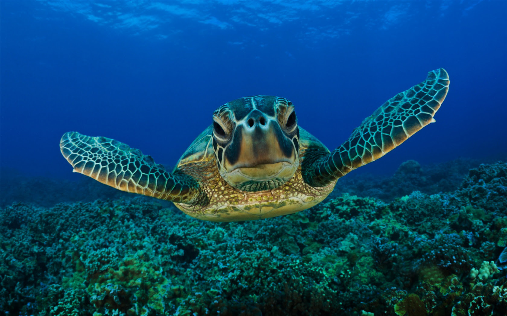 http://missjheintz.edublogs.org/files/2012/12/green-seaturtle-1-1q68zk6.jpg