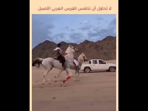 شاهد بالفديو اصغر طفل فارس على ضهر حصان عربي اصيل