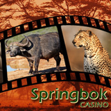 Freerolls and No-deposit Bonuses Highlight Springbok Casino Big 5 Sundays Tribute to South African Wildlife
