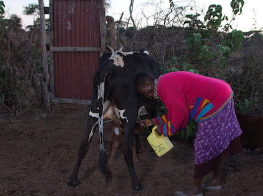 A Refreshing Take on Coops: Milk and Water Innovations in the Maasai Community
