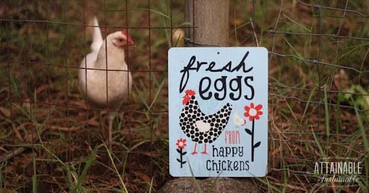 6 Mistakes I Made in the Chicken Coop (And How You Can Avoid Them)