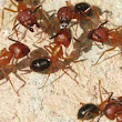 7 Golden Tips From Pest Control Experts For Preventing Ant Infestation
