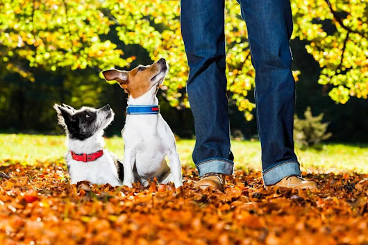 5 ways to make dog walks more fun - Tractive Blog - dogtracker, safety for your pet