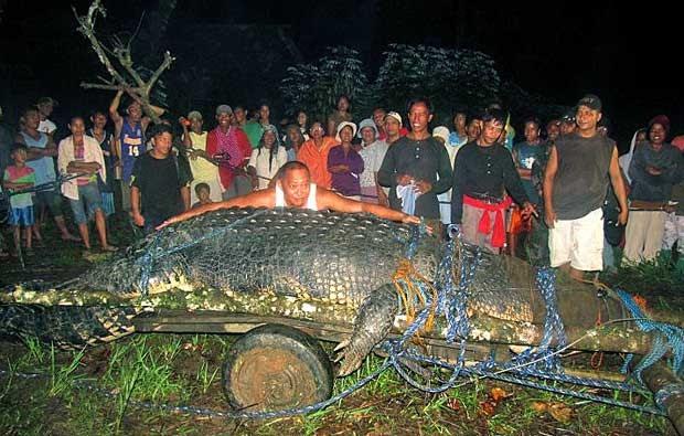 O animal foi capturado em setembro de 2011 por ser suspeito de matar e devorar um pescador e uma criança de 12 anos. (Foto: Arquivo / AP Photo)