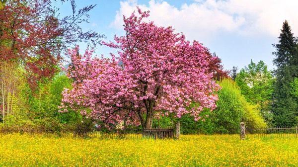 El cerezo simboliza la filosofía cradle to cradle