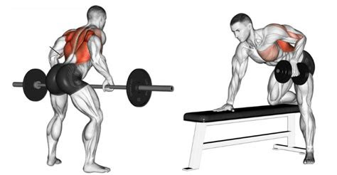exercise bent  rows hunting fit
