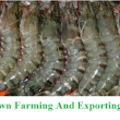 Sugpo Or Prawn Farming And Exporting - ManilaTrade