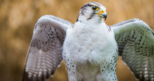Birds of Prey Day: Fun for the Entire Family
