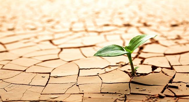 Resultado de imagem para resiliencia